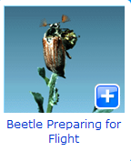 beetel flight