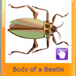 About Beetles
