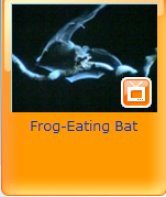 frog eating