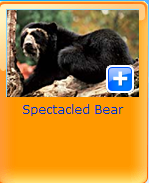 spectaled bear