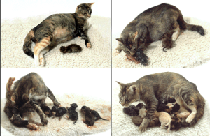 Cat Having Kittens
