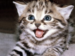 cheerful-cat