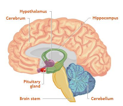 brain essay introduction Brian drain refers the situation when highly qualified and trained people leaves a country to permanently settle in some other country it is also referred to as human capital flight.